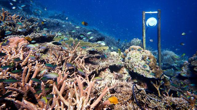 Onderwaterorkest kan vissen naar koraalrif lokken
