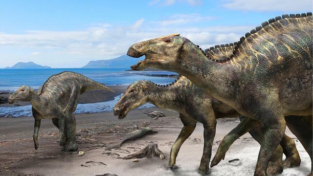 Grootste dinosaurus ooit gevonden in Japan blijkt onontdekte soort