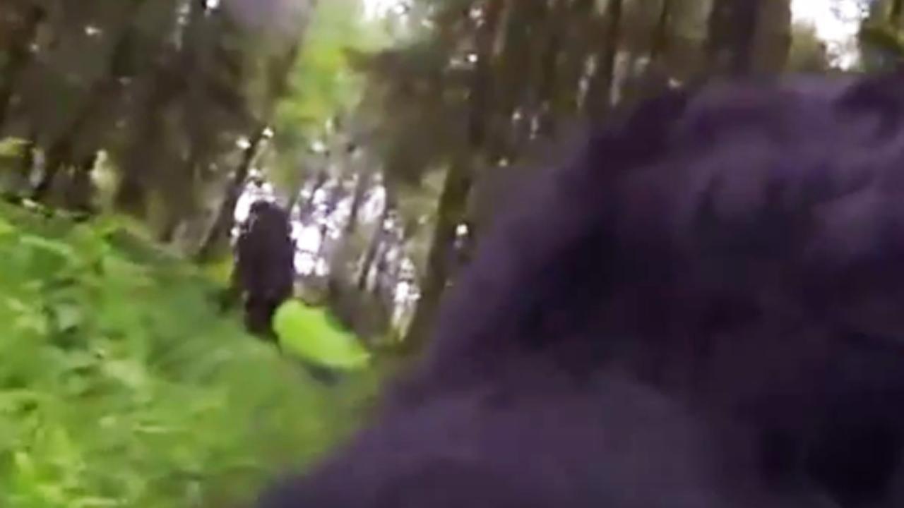 Hond met GoPro vindt Big Foot