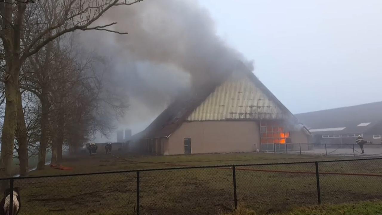 Kalveren komen om bij brand in Wieringerwerf