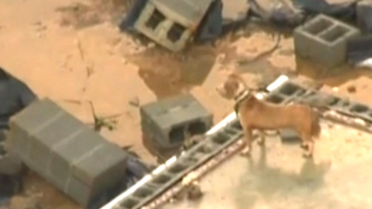 Hond struint door compleet verwoeste woning na tornado VS