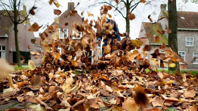 Roep om de terugkeer van bladkorven in Bergen op Zoom