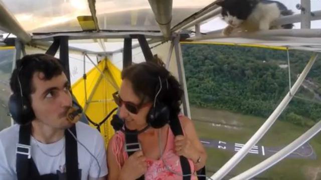 Kat vliegt per ongeluk mee op vleugel van vliegtuig