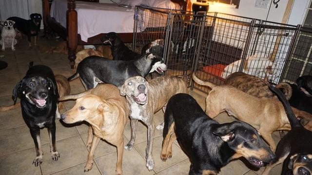 Vrouw vangt 97 honden op in eigen huis tijdens orkaan in Bahama's