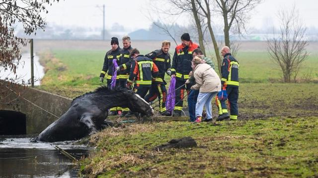 Paard raakt te water bij Rietveldsepad