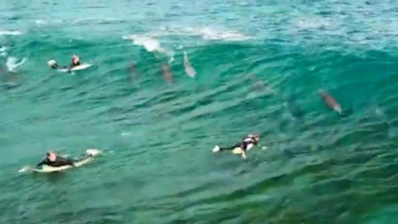 Surfers delen golf met school dolfijnen voor kust van Australië