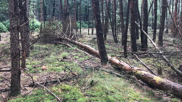 Waarom bomenkap voor Natuurmonumenten een groot dilemma is
