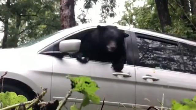 Beer breekt raam bij ontsnapping uit auto VS