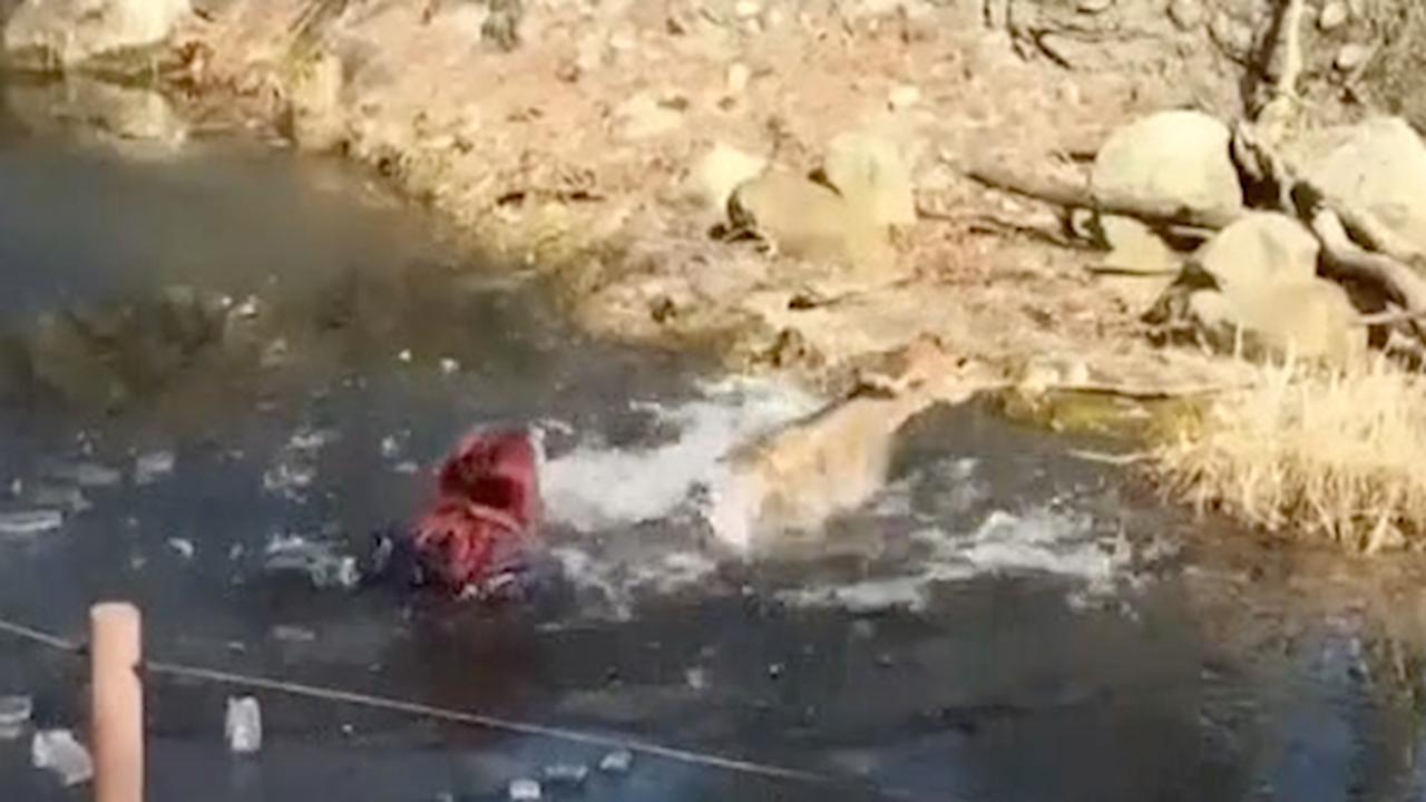 Verzorger redt antilope uit ijswater in dierentuin VS