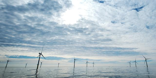 Two Towers wil vorming oesterbanken bij windmolens stimuleren