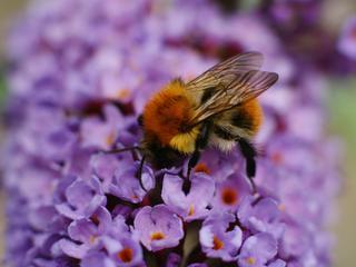 Dertien partijen tekenden Nationale Bijenstrategie