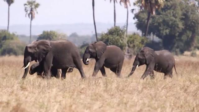 Bijna negentig dode olifanten aangetroffen in Botswana