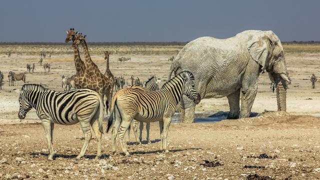 Namibië verkoopt duizend wilde dieren vanwege noodtoestand