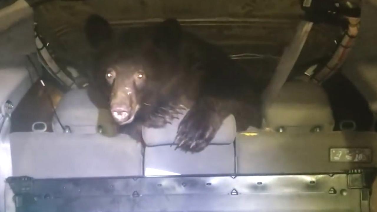 Man ontdekt beer in auto van zijn moeder in Brits-Columbia