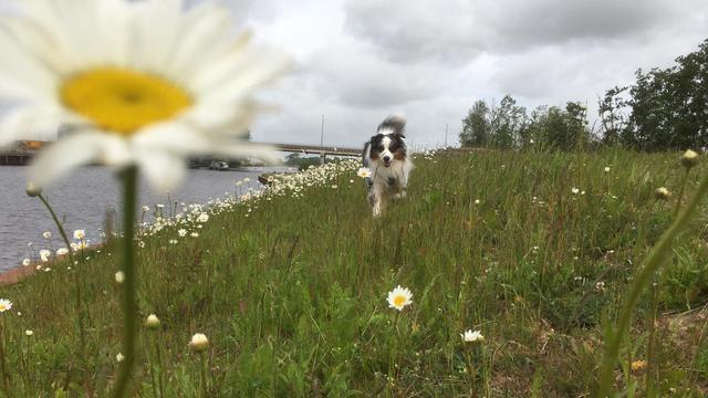 Handhavers controleren op loslopende honden in Zegerslootgebied