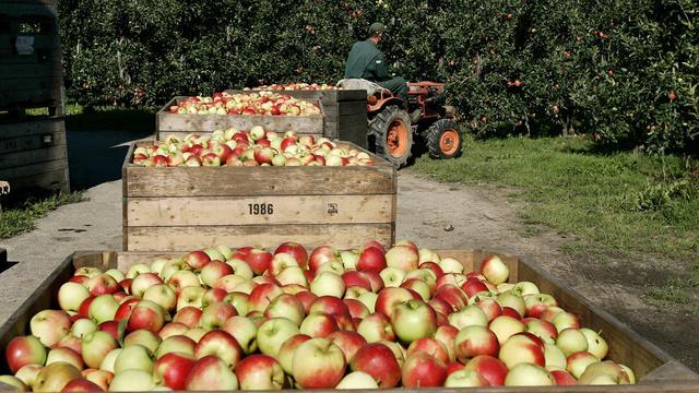 Koud voorjaarsweer zit peren- en appeloogst dwars