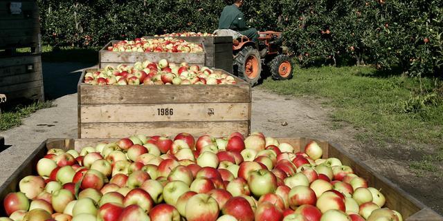 'Mogelijk duurdere appels door mislukte oogsten'