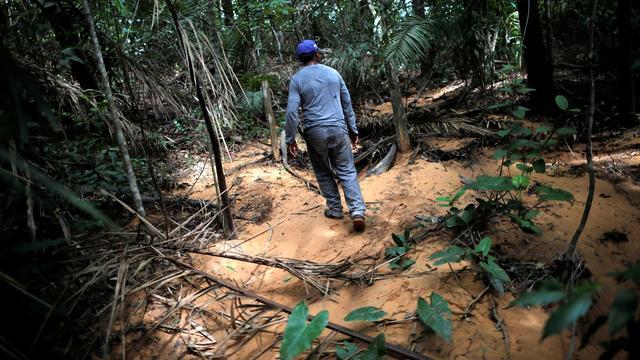 'Enorm Braziliaans natuurgebied Cerrado krimpt nog sneller dan Amazone'