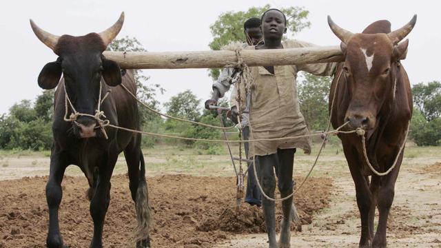 Achttien doden bij gevechten tussen herders en boeren in Niger
