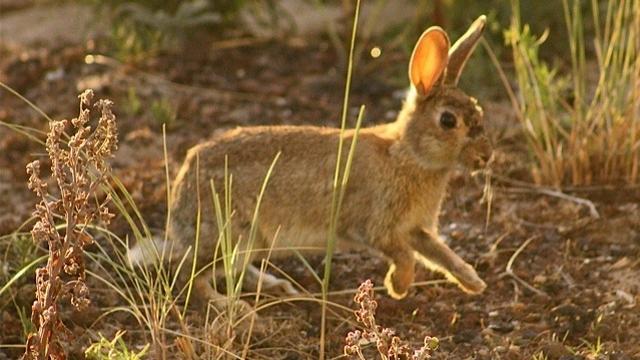 Rotterdam verdrijft met geurstofzuilen konijnen uit park en volkstuin