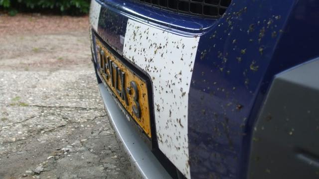 Hoe was je de insecten van je auto?