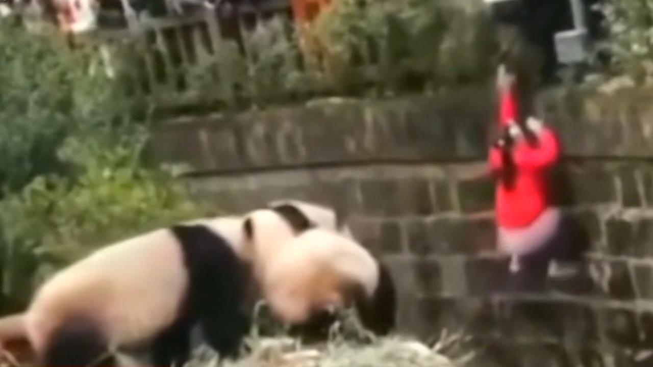 Beveiliger redt meisje uit pandaverblijf in China