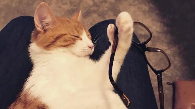 Nieuw-Zeeland rouwt om verongelukte 'First Cat' van premier