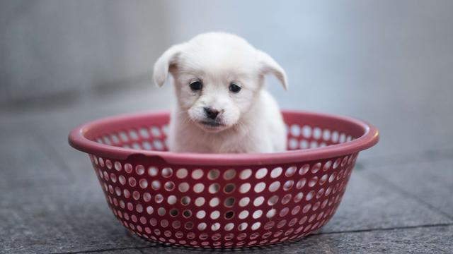 Puppy opgesloten in kofferbak auto Centrum