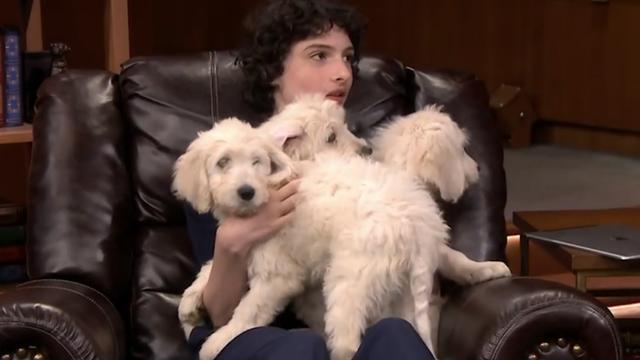 Stranger Things-acteur Finn Wolfhard 'wint' puppy's