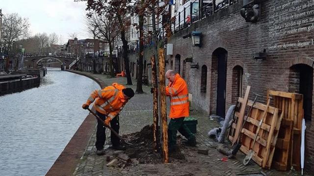 Gemeente begonnen met plaatsen bomen aan Nieuwe- en Oudegracht