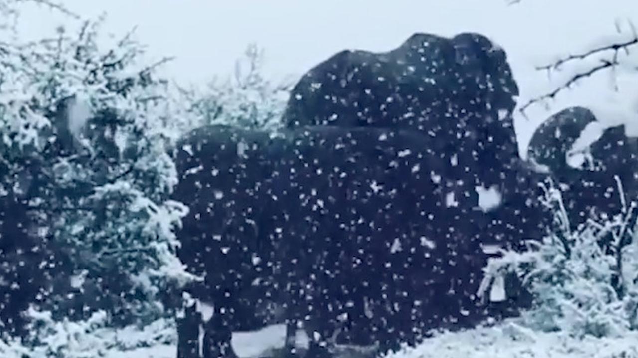 Olifanten staan samen in de sneeuw in Zuid-Afrika
