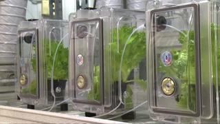 Onderzoekers willen plantengroei bevorderen met 'blaastest'