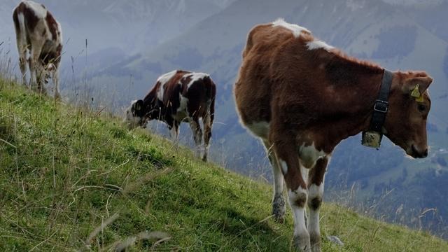 Zwitserland steelt water uit Frans meer voor koeien