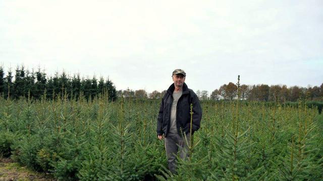 Boomkweker: 'Mensen gaan steeds eerder op zoek naar een kerstboom'