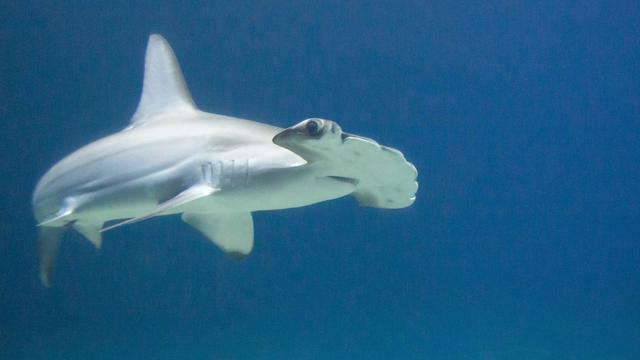 Burgers' Zoo kindercollege over haaien - Arnhem