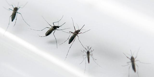 Nederland trekt kwart miljoen uit voor strijd tegen zikavirus