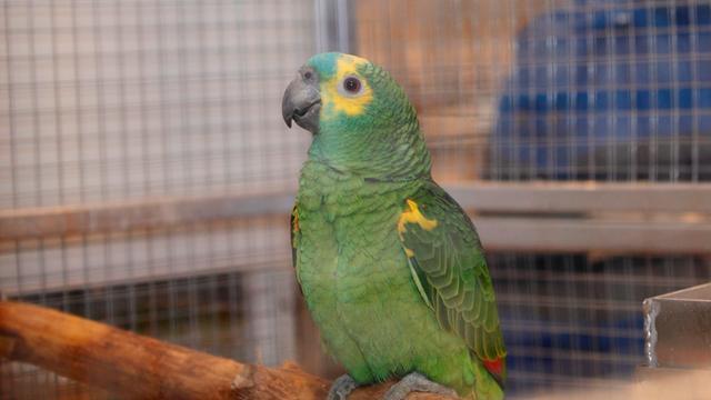 Man opgepakt met veertig gestolen vogels