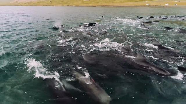 Honderd grienden gered uit ondiep fjord IJsland