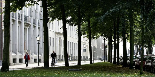 Inwoners Den Haag mogen gratis boom aanvragen om stad groener te maken