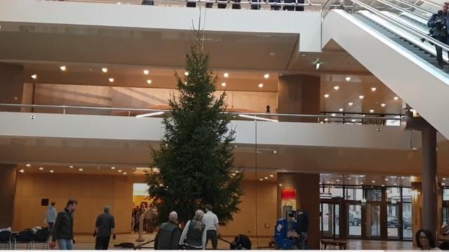Boswachters slepen megakerstboom naar gebouw Tweede Kamer