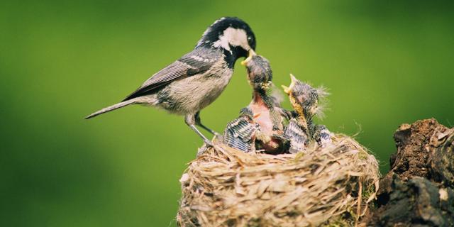 Vogels kijken via webcam: 'Het is net een soapserie'