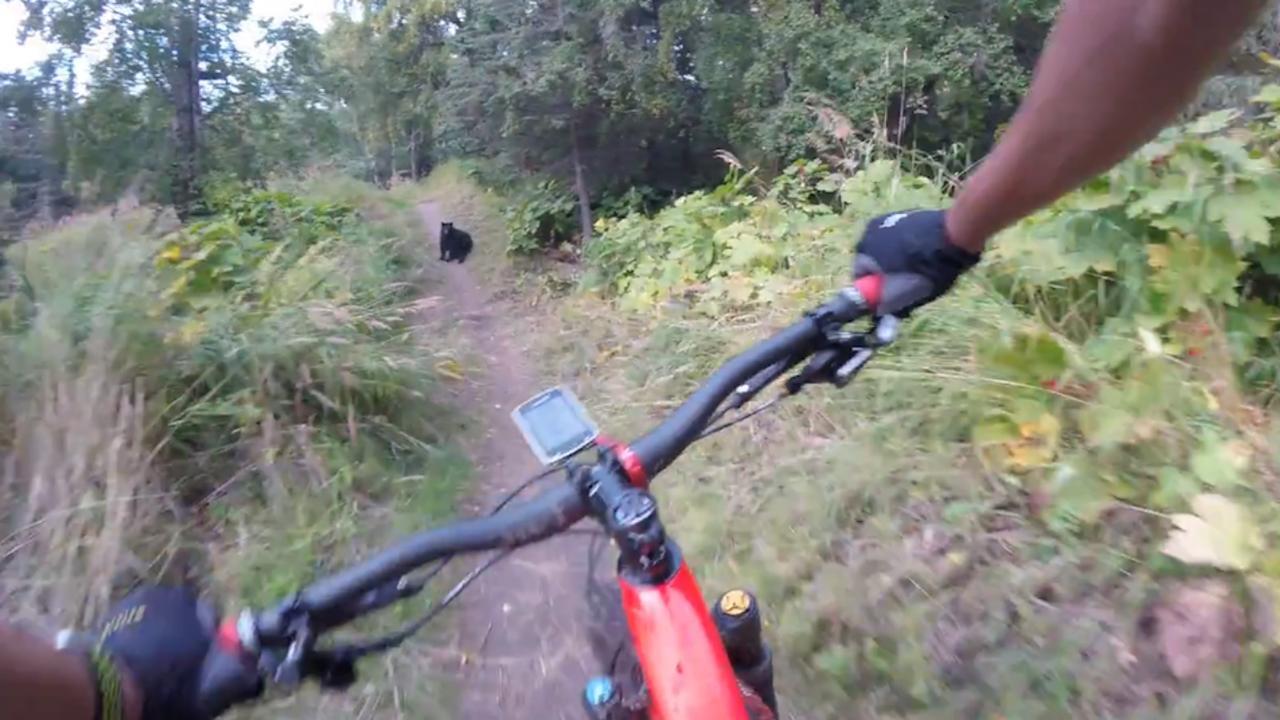 Amerikaan stuit op beer tijdens mountainbiken