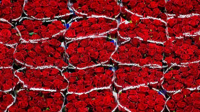 'Bloemenexport groeit volgend jaar weer'