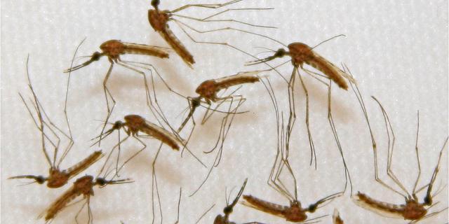 Feit of fabel: alles wat je wil weten over muggen