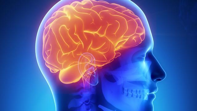 'Hersenen mens gemaakt voor empathie en vriendschap'