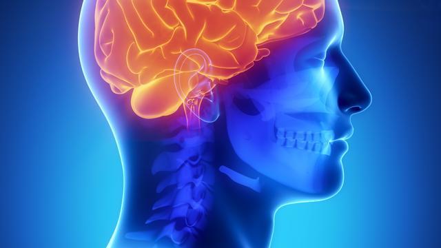 'Hersenstructuur heeft invloed op aanleg voor talen'