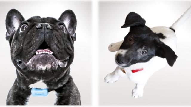 Stappenteller voor honden komt er definitief