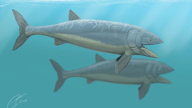 Grootste prehistorische vis werd 16 meter lang