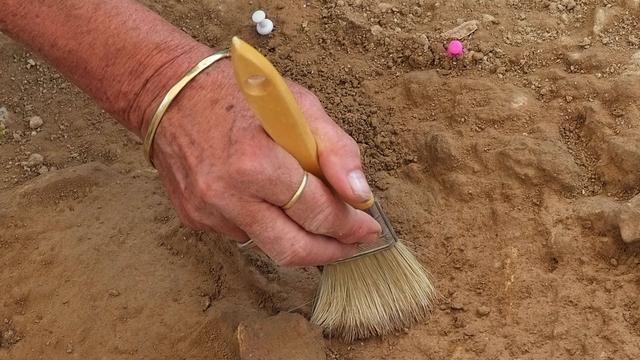 Archeologen vinden bronzen beitel in grafheuvel bij Westwoud