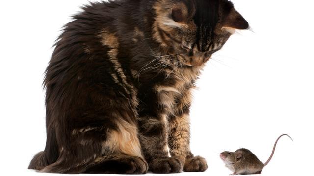 Katten helpen mens al vijfduizend jaar tegen muizen